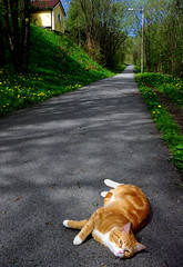 Draw me like one of your french girls - Cat pose (hanne_hj) Tags: road trip wild orange green nature animal norway cat pose fur ginger paws drawmelikeoneofyourfrenchgirls