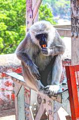 Many, Many Monkeys (alternate_world) Tags: india river religious peace citylife serenity spirituality ganga ganges ghats rishikesh riverlife
