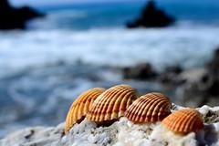 Artistic (Giuseppe Oricchio) Tags: shells macro artistic 40mm nikon coloseups closerandcloser sea blue orange giuseppeoricchio