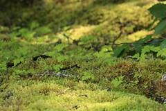 Mossy Nature Abstract Textures Spectacular Land/Sea Scape Kachemak Bay Cook Inlet Kenai Peninsula Alaska North America (eriagn) Tags: northamerica alaska cookinlet kenaipeninusla kachemakbay kasitsnabay homer homerspit moody landscape seascape eriagn ngairehart ngairelawson travel photography marine wildlife naturalhistory scenic mountains snow seaweed woods forest wilderness tidal sunset dawn tranquil halibut rope mossy dinghy garden flora shell cormorant kayak alaskanrange glacier chair landotter wildflower fauna nature natural beauty inspiring summer season natureasabstractartist