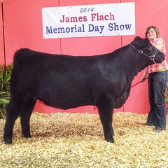"Champion Mainetainer Flach Show 2014 • <a style=""font-size:0.8em;"" href=""http://www.flickr.com/photos/25423792@N05/14082111958/"" target=""_blank"">View on Flickr</a>"