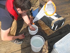 Processing Marine Ecological Samples