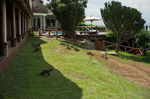 RYALE_Rwanda_Uganda_Safari-330