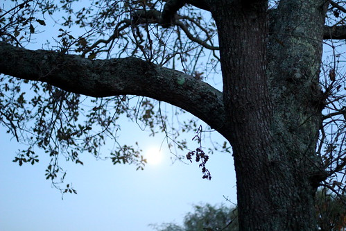 Wednesday: full moon!