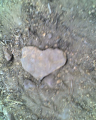 Heart shaped rock <3