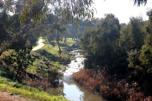 Rapids on Merri Creek in Fawkner - bushland in the middle of suburbia