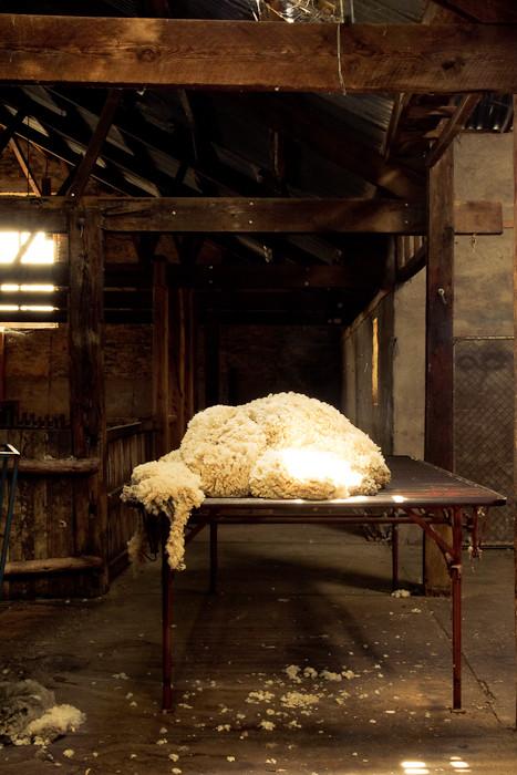 Wool sorting table