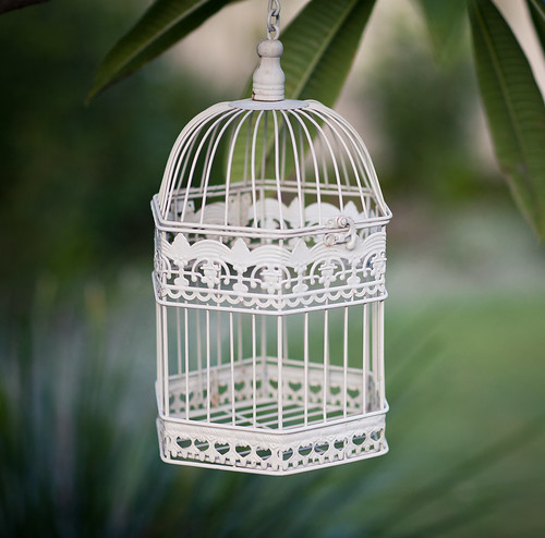 tree green bird cage