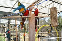 FIRST DAY OUT 2012 (RLBrinkman~in and out-mostly out) Tags: birds aviary macaw pars parrots greenwingmacaw blueandgoldmacaw scarlettmacaw parrotsr4ever