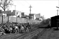 Donkeys (RhinopeteT) Tags: india steam locomotive ajmer mpd
