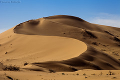 Desert Dunes (TARIQ-M) Tags: pictures shadow sky cloud texture sahara lens landscape photo sand waves pattern desert image photos ripple patterns dunes picture wave images ripples riyadh saudiarabia      canoneos5d      goldensand      canonef70200mmf4lusm            dahna  canoneos5dmarkii          aldahna