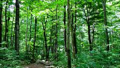 Une envie de vert (bbferrand) Tags: nature canon 169 mont laurentides s100 madameb canonpowershots100 linterval kaaikop ete2012 saintjeanbaptiste2012