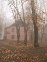 PA165143 (koliru) Tags: old city morning autumn trees mist yellow dark foggy olympus peoples brocken e300 leafs fogg 1445mm