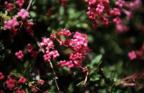 """251Zypern Troodos Unbestimmte Pflanzen • <a style=""""font-size:0.8em;"""" href=""""http://www.flickr.com/photos/69570948@N04/14115127786/"""" target=""""_blank"""">Auf Flickr ansehen</a>"""