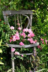 in my garden (Marlis1) Tags: roses chair rosen shabbychic raubritter marlis1 mediterraneangardens ilroseto tortosacataluaespaa