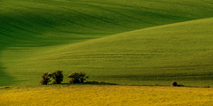 swirl (Sam_C_Moore) Tags: england landscape sussex swirl nationaltrust comb rollinghills southdowns sweeping greenfields