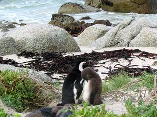 Cape Town Luxury Safari 2