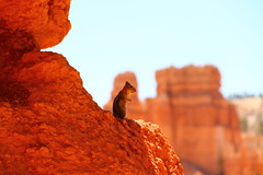 King of the rock (Sanda_I) Tags: wild usa cute nature animal landscape utah nationalpark squirrel moment brycecanyon