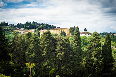Trees (pghizzi) Tags: italy 50mm florence europa italia tuscany firenze nikkor f18 florena primelens