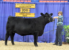 "Bred/Owned Class Winner NAILE '11 • <a style=""font-size:0.8em;"" href=""http://www.flickr.com/photos/25423792@N05/14438588785/"" target=""_blank"">View on Flickr</a>"