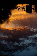 Nettetal De Wittsee (Christoph Kampf) Tags: nettetal wittsee dewittsee deutschland natur grün germany nature nrw reflection relektion sunset sonnenuntergang gold orange blue blay wasser water ripples wellen vögel silhouette mirror spiegelung d700 nikon fx 80200 nikond700