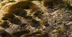 Scorrere (lincerosso) Tags: acqua water riflessi ruscello scorrere limpidezza luce colore bellezza armonia