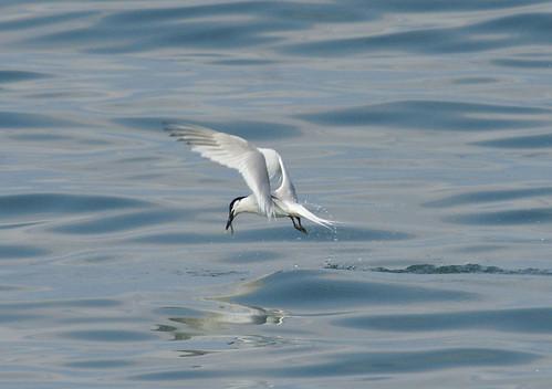 Sea Fishing by julian sawyer