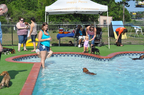 Dachshund Pool Party 2011 (77)
