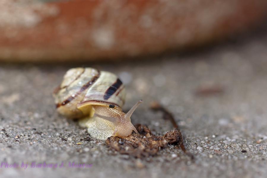 Snail (2 of 3)
