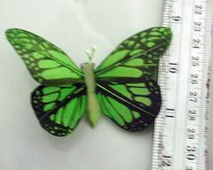 souvenir kupu sablon tanggung