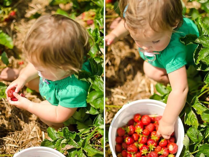 Strawberry Picking9-Edit