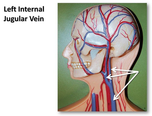 Left Internal Jugular Vein The Anatomy Of The Veins Visual Guide