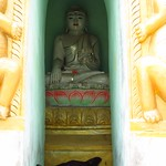 "Dogs Napping in Temple <a style=""margin-left:10px; font-size:0.8em;"" href=""http://www.flickr.com/photos/14315427@N00/6924352970/"" target=""_blank"">@flickr</a>"