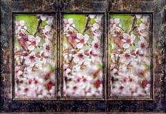 Blossom Screen (tleparskas) Tags: texture photoshop triptych chinese screen adobe topaz lightroom textureblends