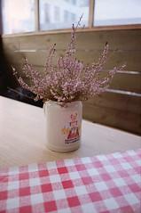 Erdinger for Oktoberfest (Jess P.C.) Tags: beer nikon meetup kodak heather mug tablecloth portra checkered aarhus fm2 rhus 160nc