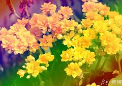 Flower (娜 娜☂Nana) Tags: life flowers light plant flower green love nature beautiful nikon colorful natural bokeh taiwan lovely 台灣 台灣taiwan i 我愛台灣 flowersbokeh d7000