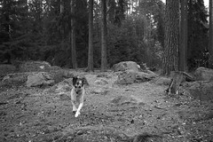 Running vignetti (Kirppu_81) Tags: blackandwhite mustavalko epl3 tampere lokakuu