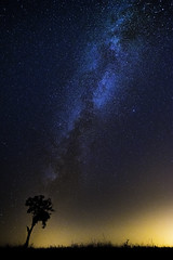 A Trees's Soul (Hugo Carvoeira) Tags: milky way tree wait time timing soul pego altar alccer sal portugal sky outdoor
