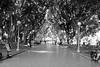 Hyde Park (lukedrich_photography) Tags: australia oz commonwealth أستراليا 澳大利亚 澳大利亞 ऑस्ट्रेलिया オーストラリア 호주 австралия newsouthwales nsw canon t6i canont6i history culture sydney سيدني 悉尼 सिडनी シドニー 시드니 сидней metro city hyde park cbd centralbusinessdistrict sidewalk path pedestrian tree lined bench lamppost public greenspace
