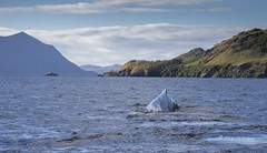 Kodiak Scene (Rick Derevan) Tags: alaska kodiak whale humpbackwhale kodiak2016 kodiaktrip2016 places