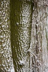 ckuchem-1658 (christine_kuchem) Tags: baumrinde buche bume eiche eis frost hainbuche natur pfad pflanzen ruhe samen spuren stille struktur wald weg wildpflanzen winter einsam kalt schnee ste