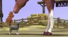 Sims 3 Pets 39