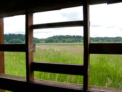 2011-06-21 Through this window is another world (Mary Wardell) Tags: flowers green window grass canon washington blind ridgefield 40d ourdailychallenge