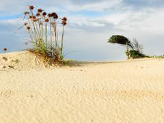 (Petrov Fotos) Tags: sky sand wind dunas petrov riograndedonorte escario