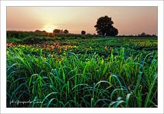 Profondità (gianpaolo4) Tags: verde canon tramonto fuoco esposizione prospettiva cavalletto campi
