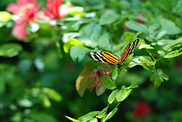 flutter_0641