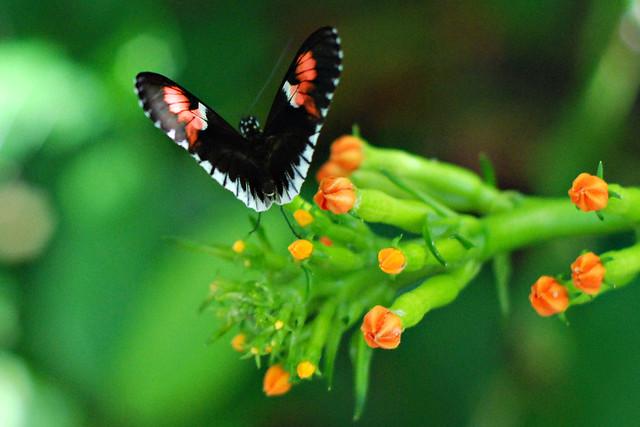 flutterheart_0659