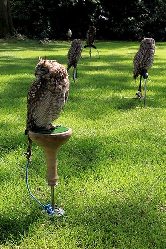 owls sitting on grass