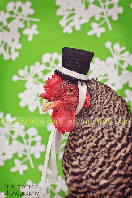 tophat chicken