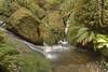 Foamy Water at Blackheath (TheGreatContini) Tags: green water creek river moss rainforest rocks blackheath grandcanyon sydney australia foam nsw newsouthwales flowing ferns damp humid bluemountainsnationalpark mositure